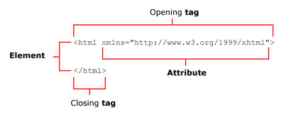 Components of a typical XHTML element