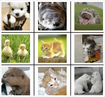 KittenAuth test